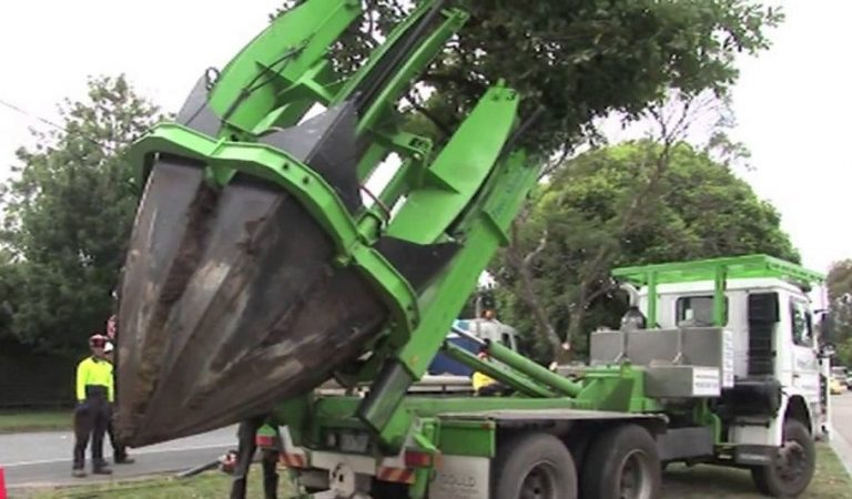 Now you don't have to cut down trees